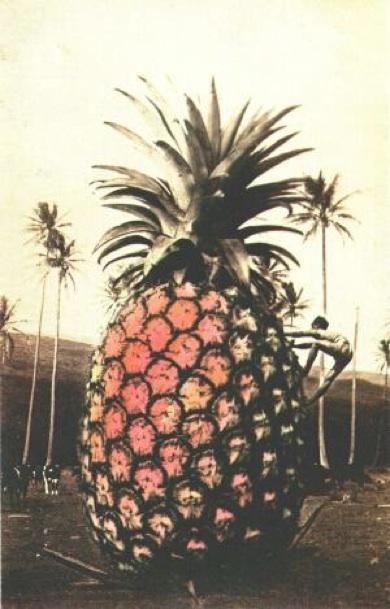 Ananasboor