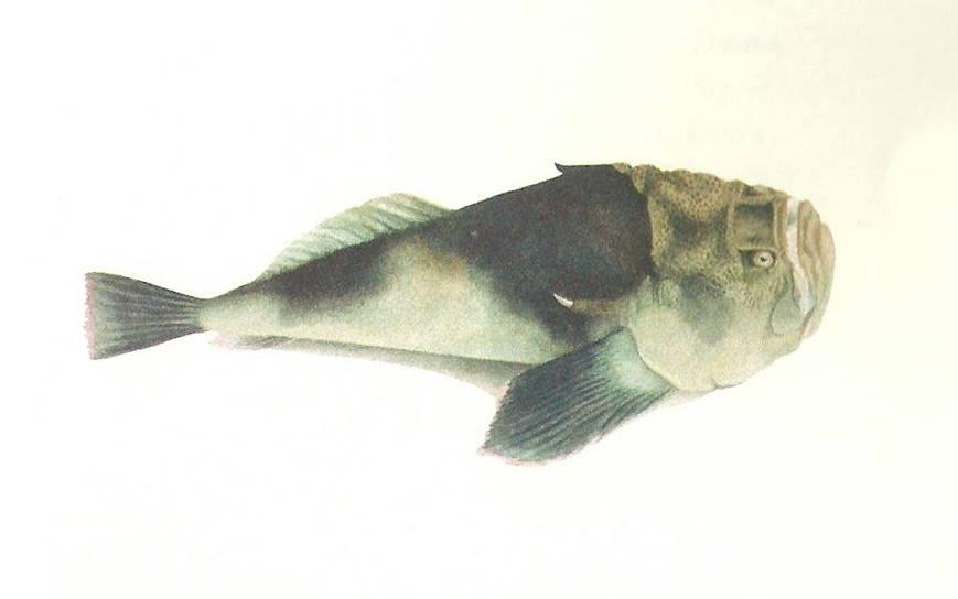 Een roman in 12 vissen