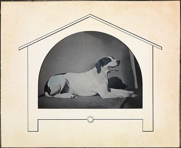 De hondenfluisteraar