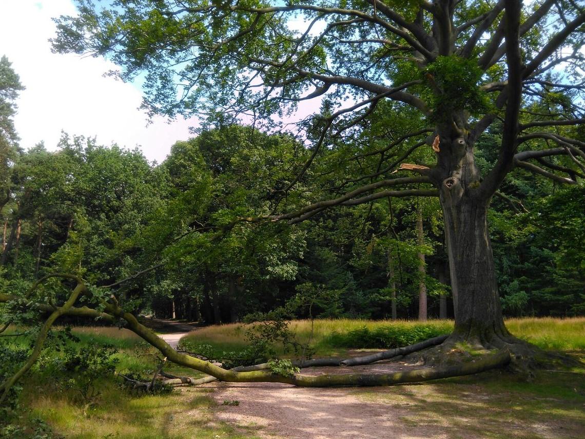 Bredase boom splijtzwam voor de overheid