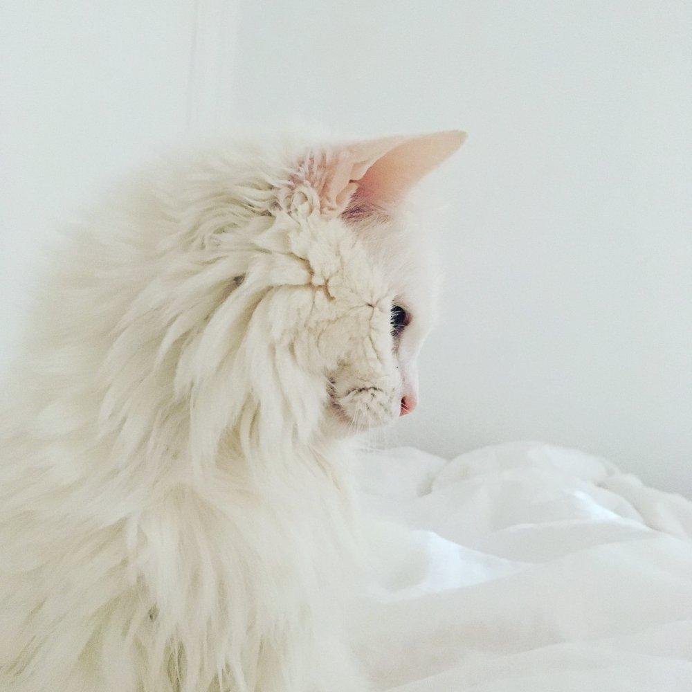 Tip: Neem geen kat 1