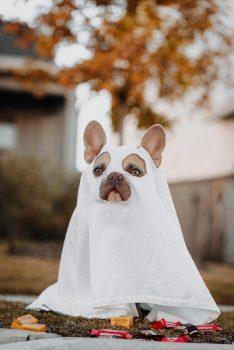 Alles Vijf Sterren: Horror, honden en verlangen 1